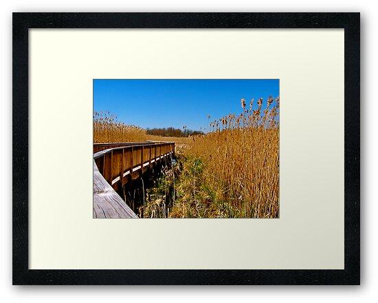 """""""On the Boardwalk!"""" by Nancy Richard"""
