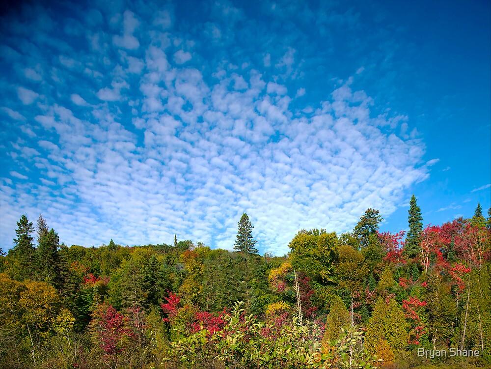 Buttermilk Skies by Bryan Shane