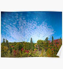 Buttermilk Skies Poster