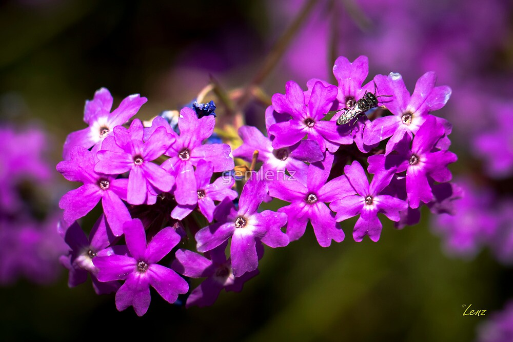 Pretty in Purple by gemlenz
