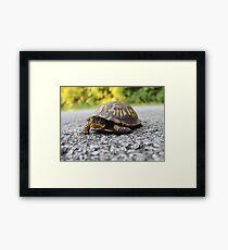 Mr. Turtle Reptile Framed Print
