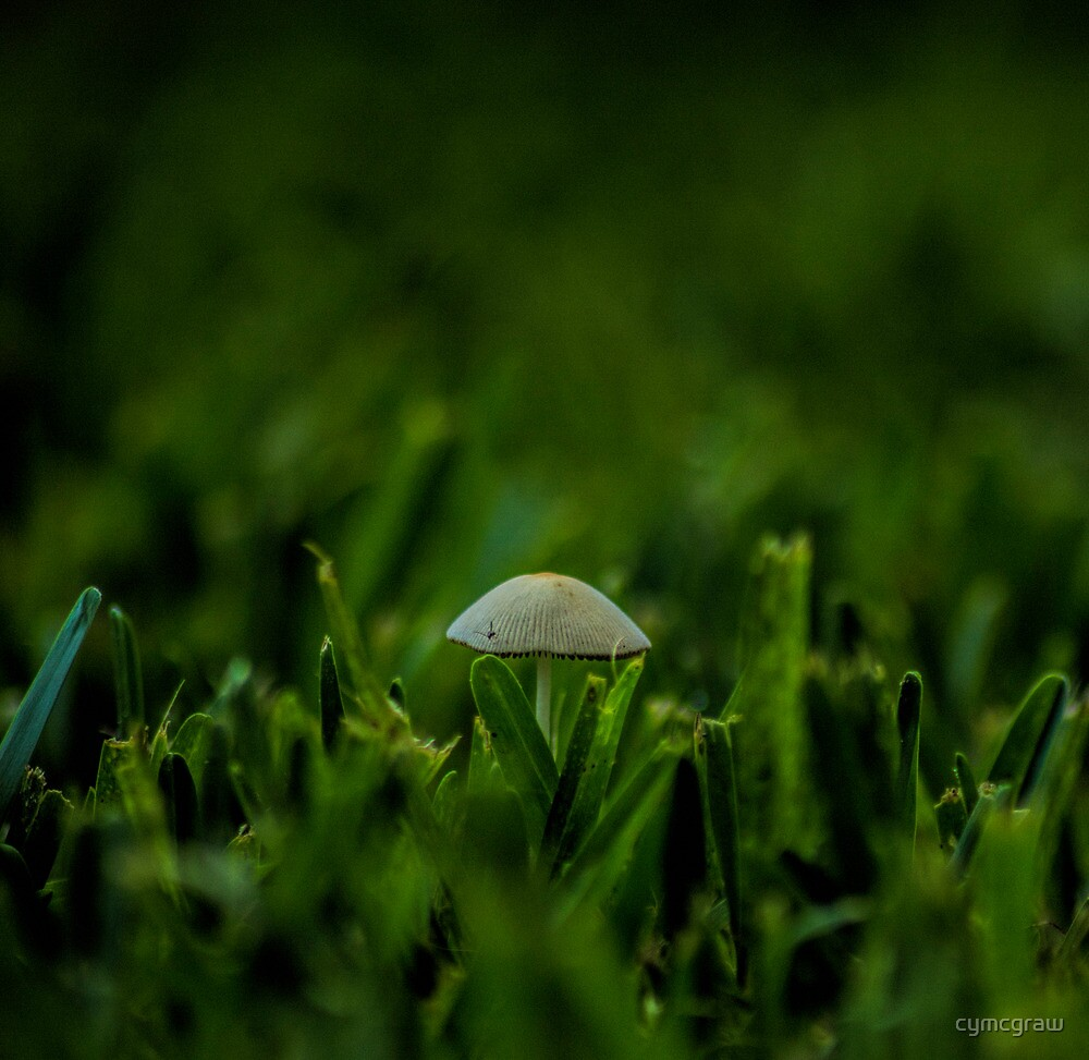 Very small by cymcgraw