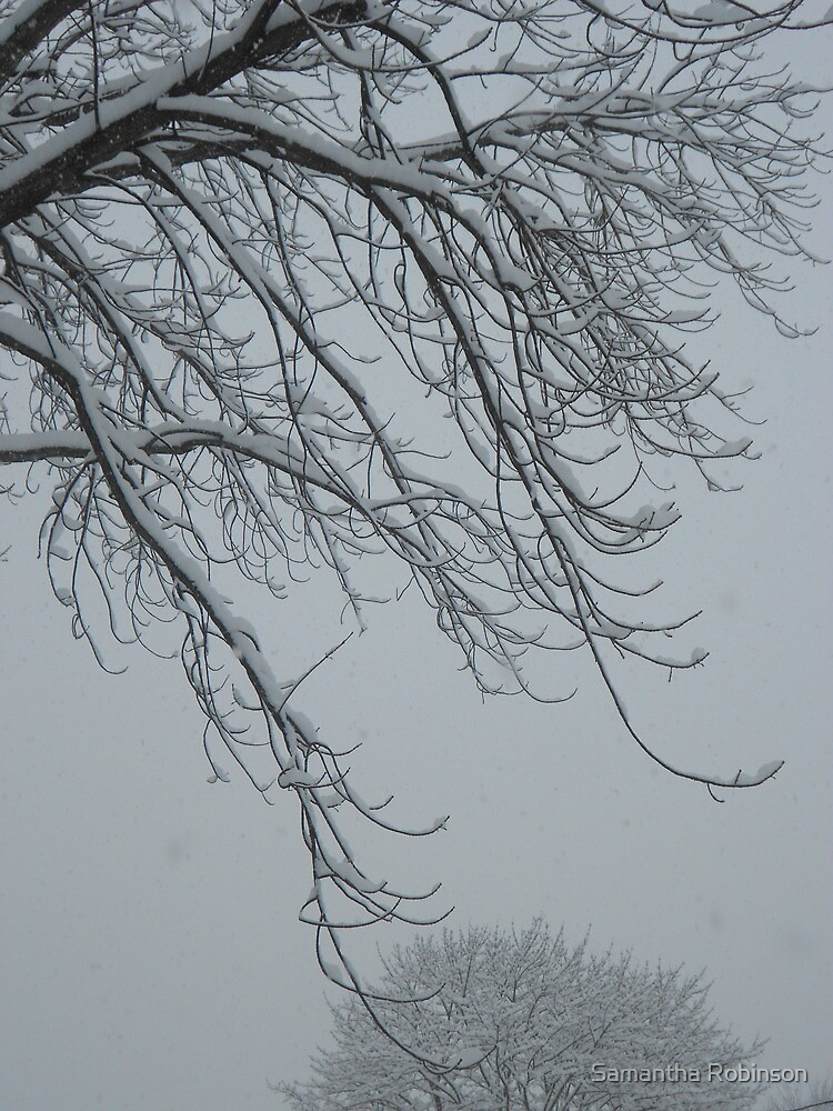 Snowy branches by Samantha Robinson