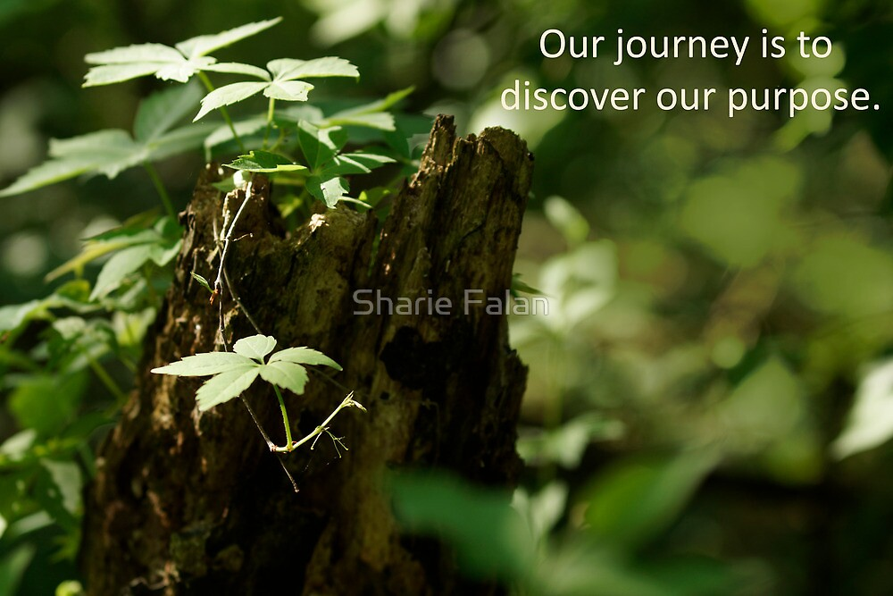 Purpose by Sharie Falan
