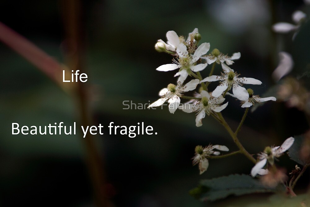 Life, beautiful yet fragile by Sharie Falan