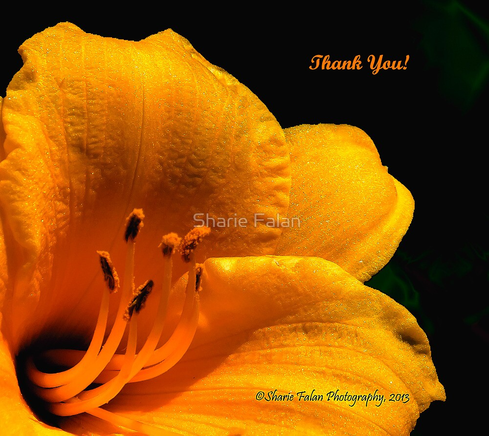 Thank you by Sharie Falan