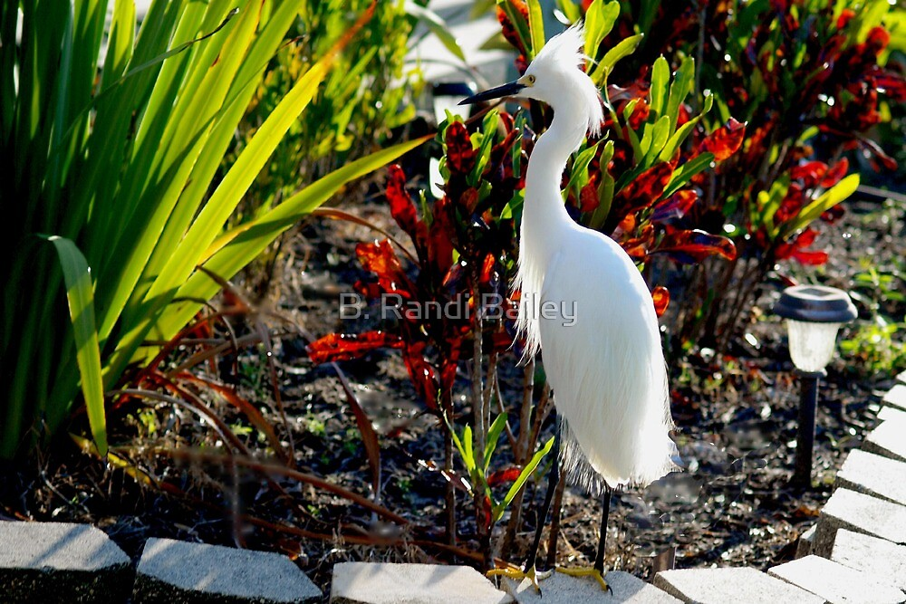 Egret in the planter by ♥⊱ B. Randi Bailey