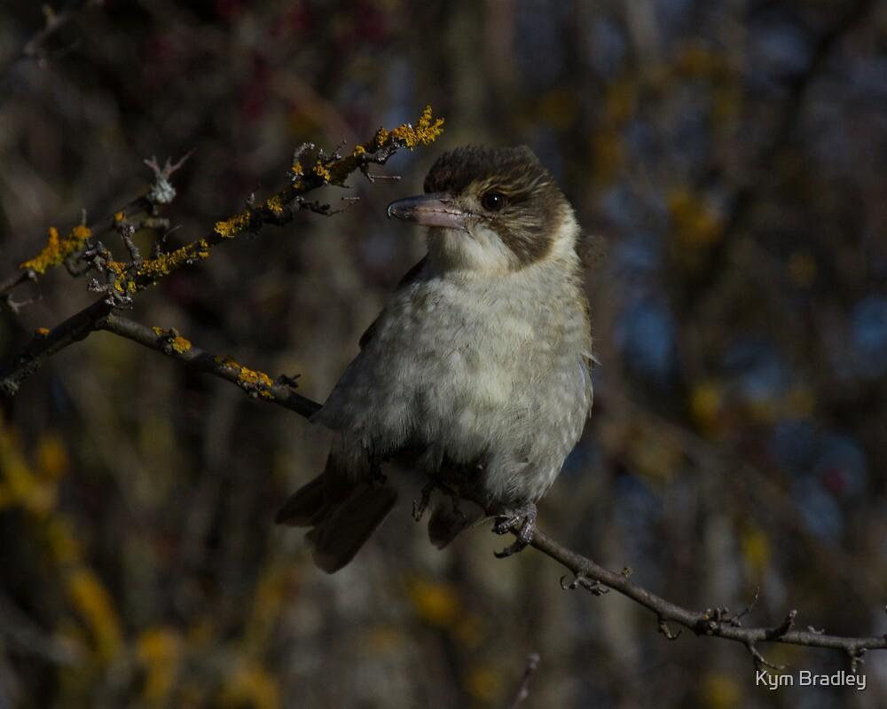 Butcher Bird  by Kym Bradley