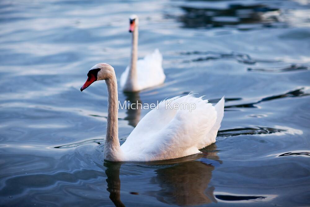 Summer Swan by Michael  Kemp