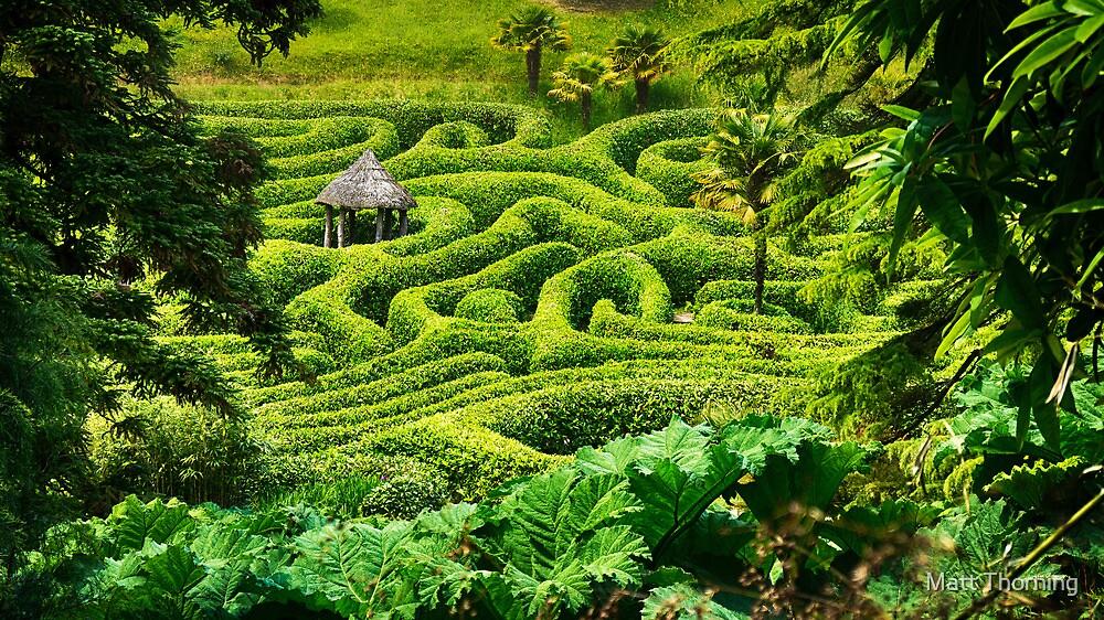 Glendurgan Maze by Matt Thorning