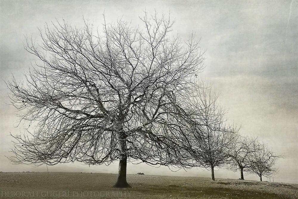 Winter  by dgugeri
