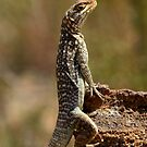 My Rock  - Iguanidae  - Oplurus quadrimaculatus - Isalo Madagascar by john  Lenagan