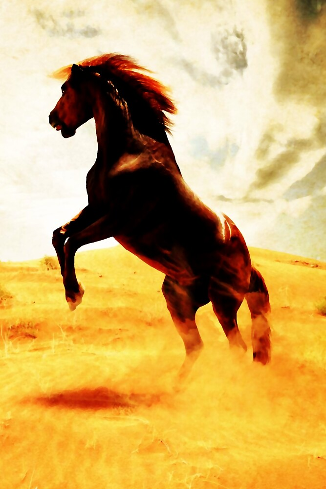 The spirit of freedom by Terry Bailey