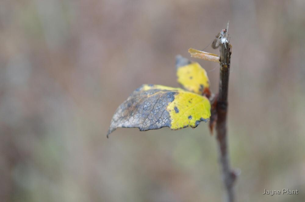 Autumn Twig by Jayne Plant