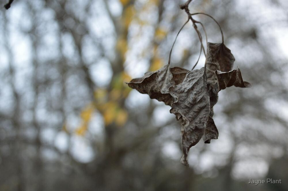 Crinkled Leaf by Jayne Plant