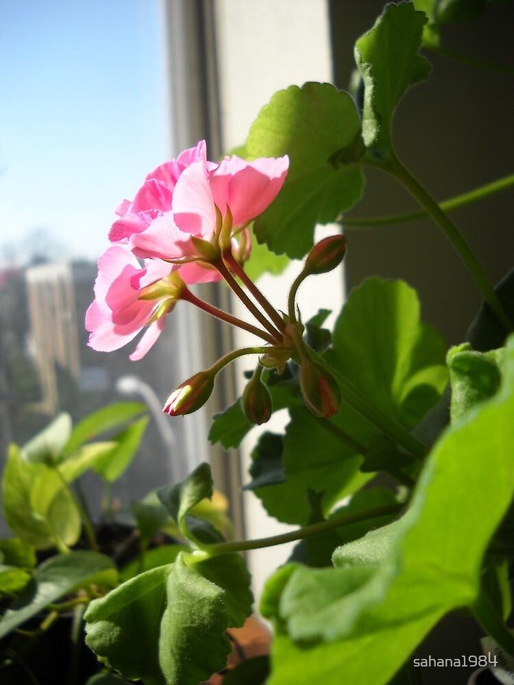 Blooming under the sun by sahana1984