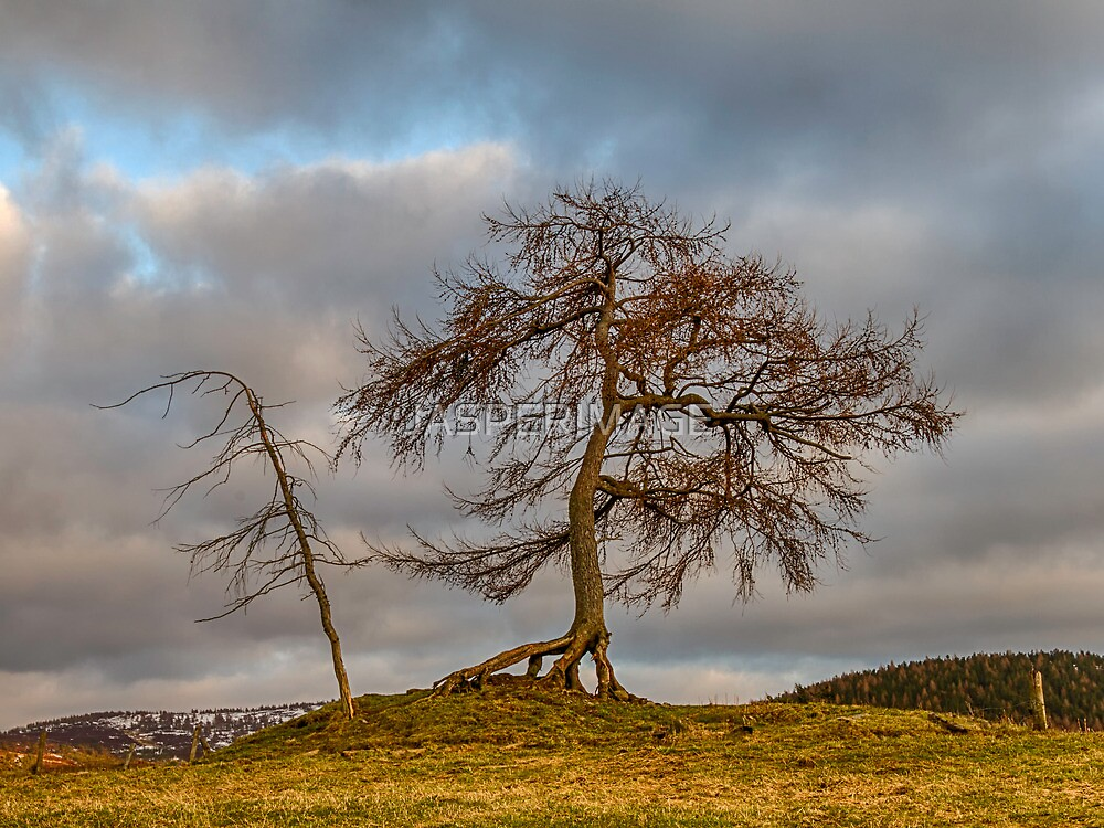KILDRUMMY - THE ENTS by JASPERIMAGE