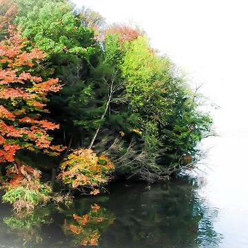 Fall Trees on the water by tcausley
