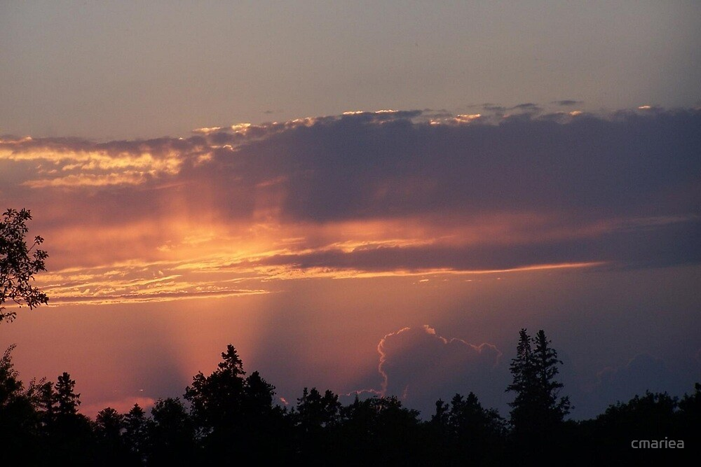 sunset over the trees by cmariea