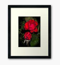 Rose in the night Framed Print