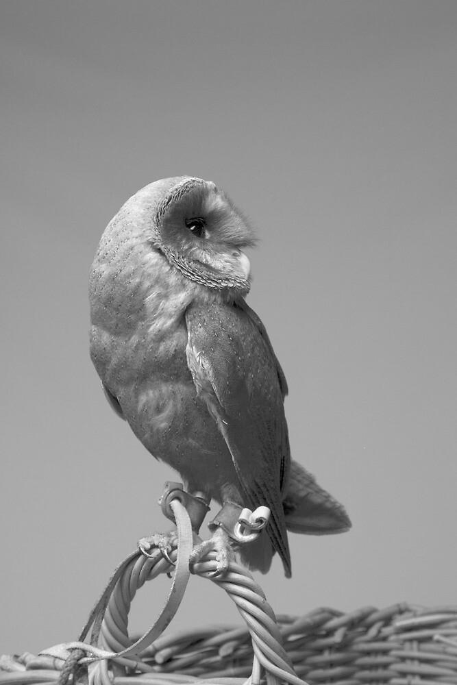 Barn Owl by MarkElsworthPic