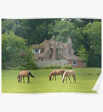 New Forest Ponys Poster