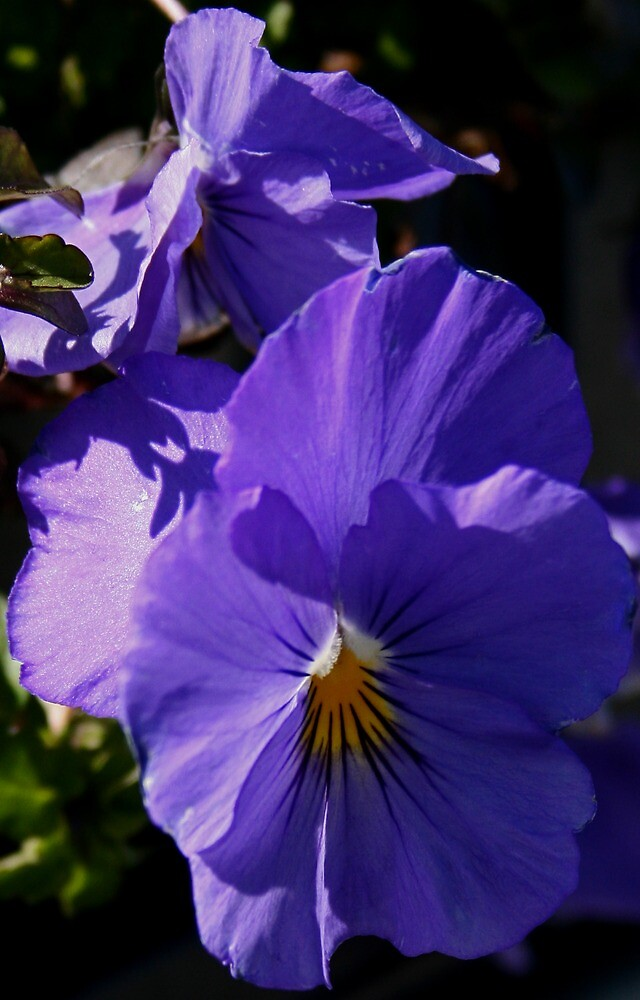 Purple Pansies by Karen Harrison