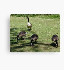 Here we are all grown up now! Canvas Print