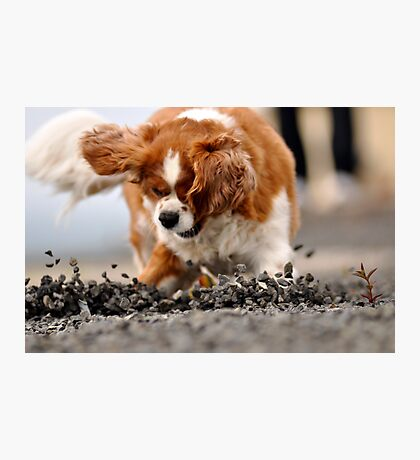 Alfie 3 Gravel trap Photographic Print