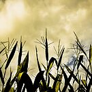 Storm over the cornfield.. by Wendy Mogul