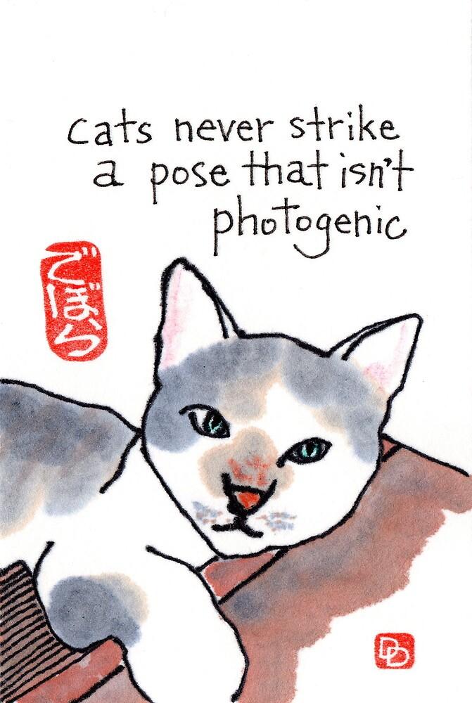 Photogenic Cat by dosankodebbie