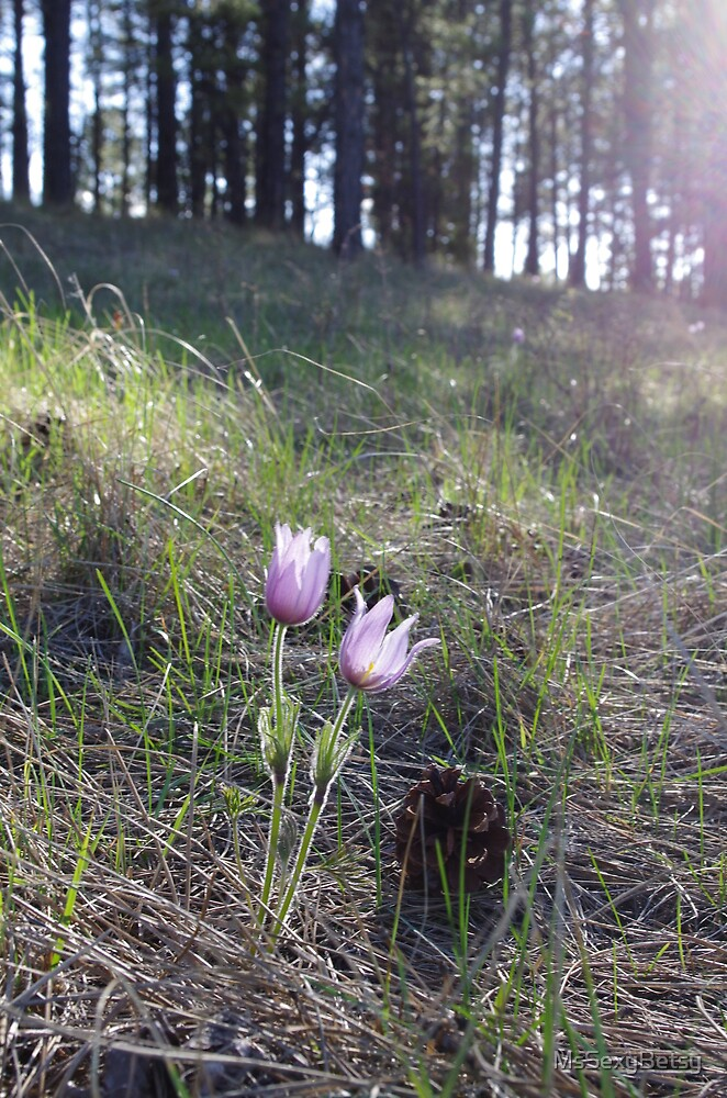 Crocus Couple by MsSexyBetsy