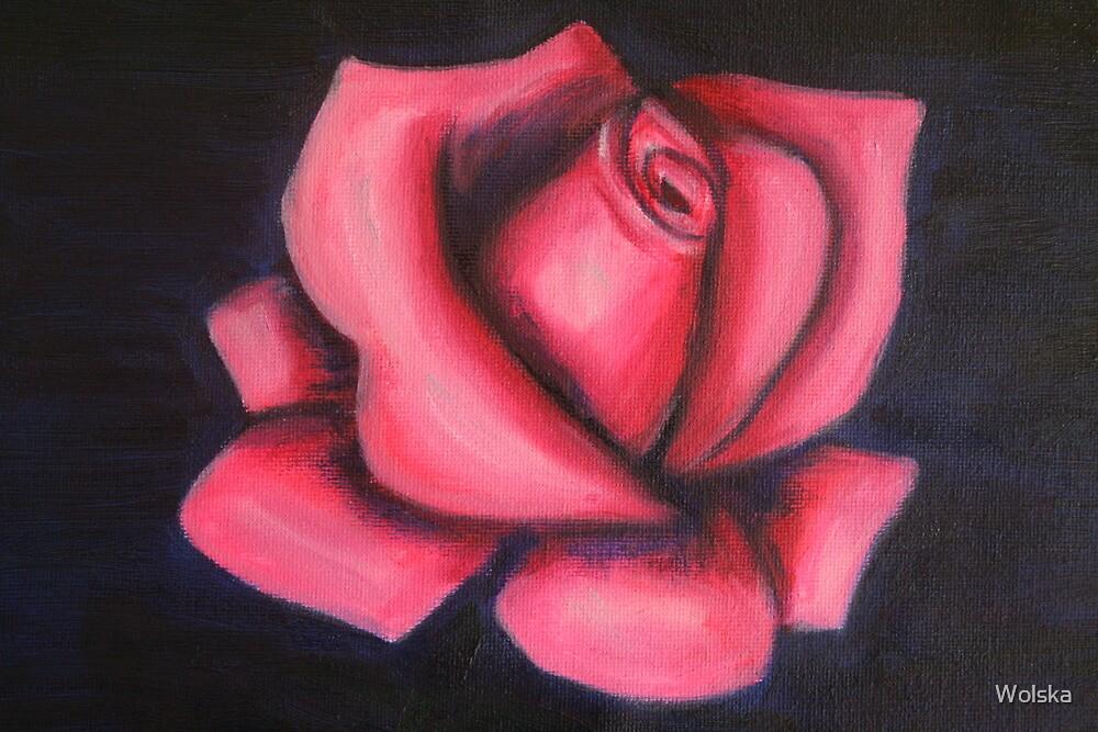 Pink rose by Wolska