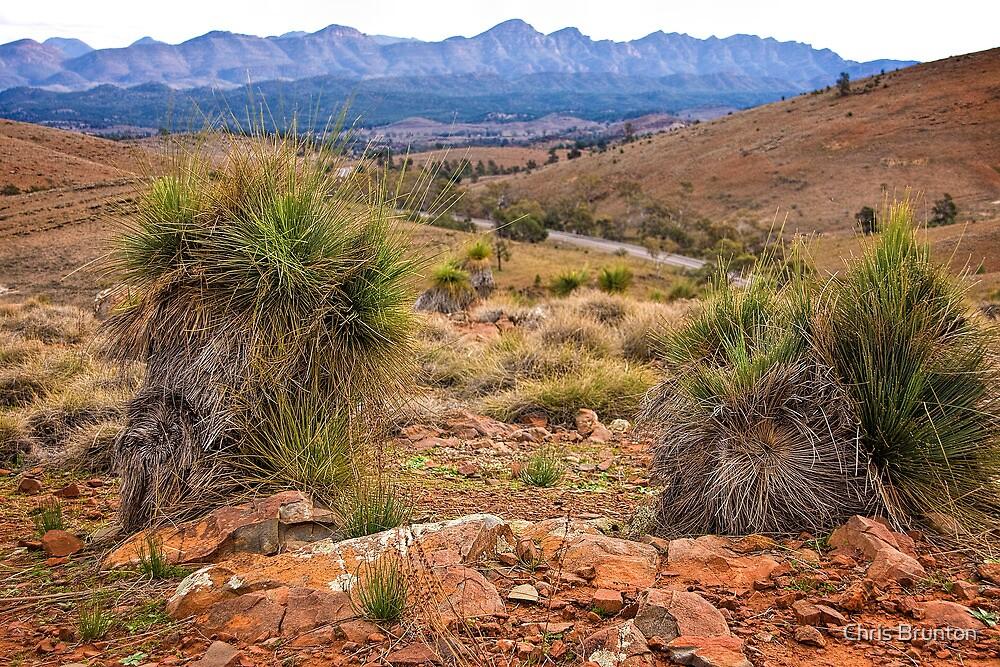 Flinders Ranges by Chris Brunton