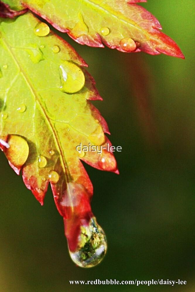 Drip by daisy-lee