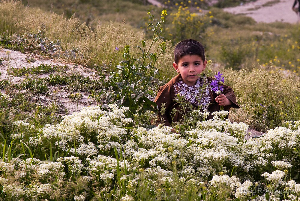 Picking Flowers at the King's Palace in Kabul by David R. Anderson