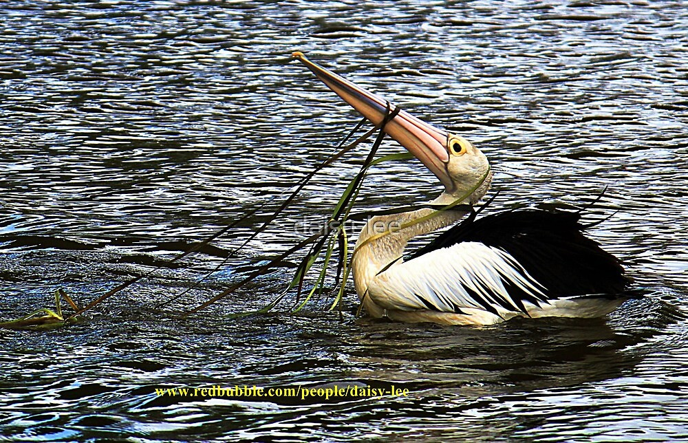 Pelican caught in water reeds  by daisy-lee
