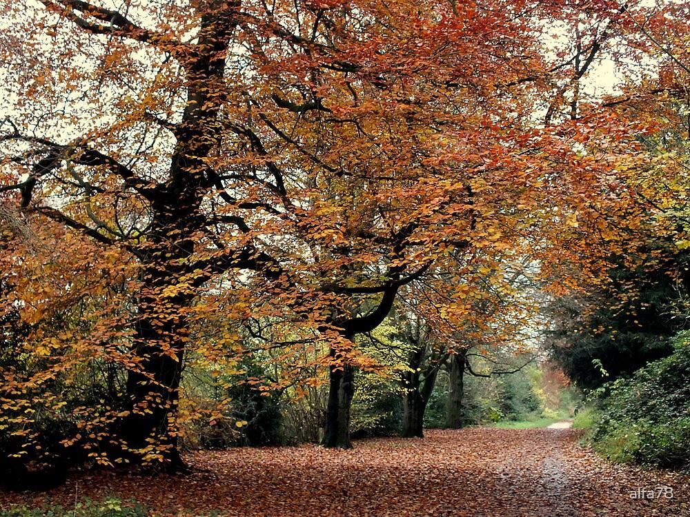 Autumn Trees  by alfa78