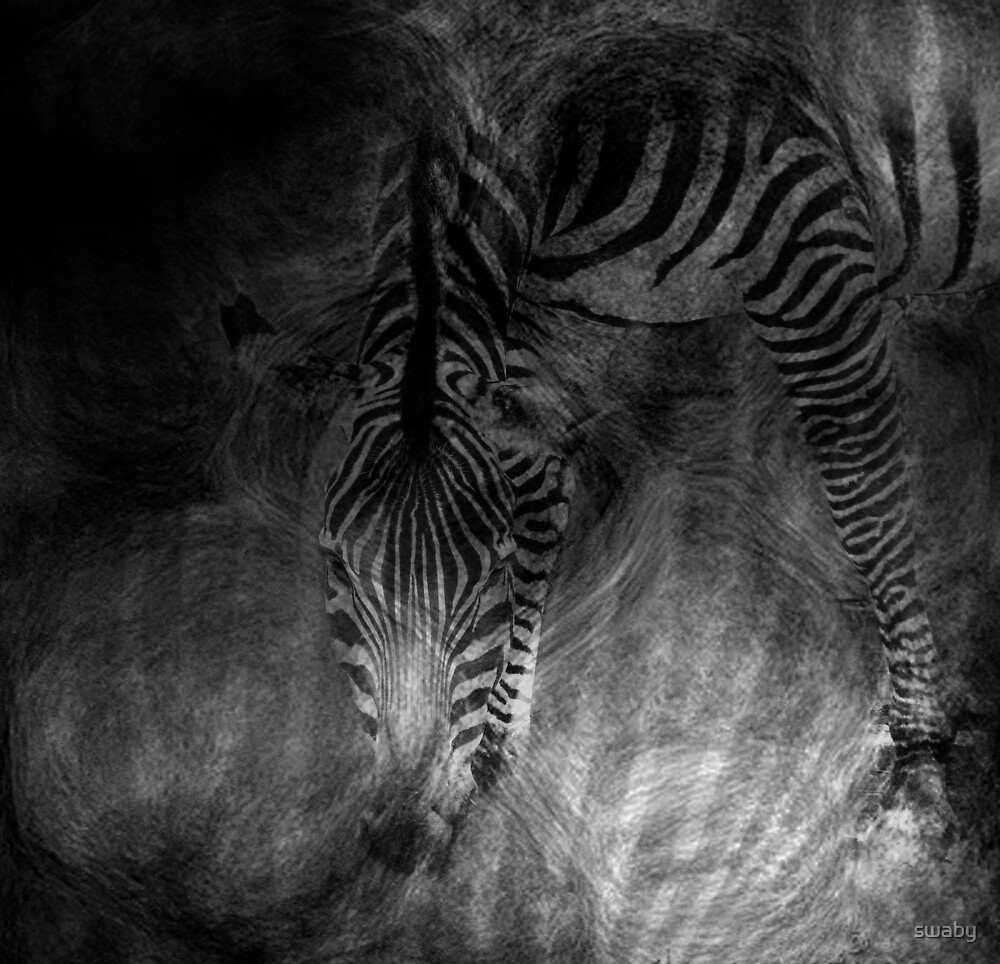 Zebra Abstract by swaby
