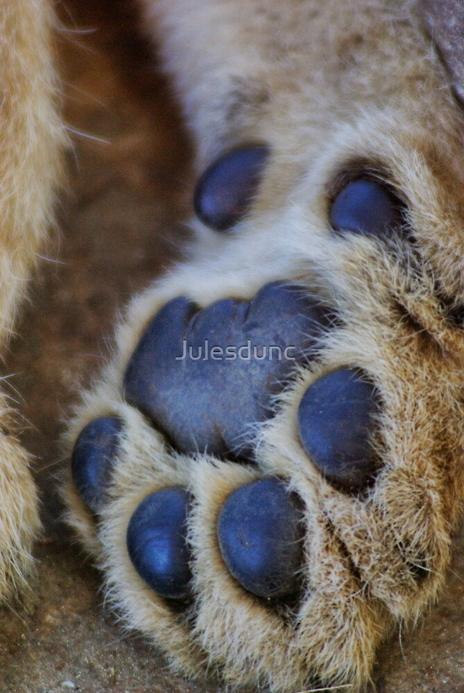 lion's paw by Julesdunc