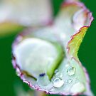 Feuille Verte by steph680