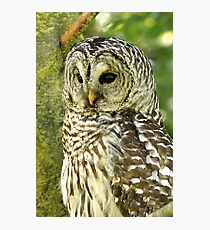Majestic Denizen of the Forest Photographic Print