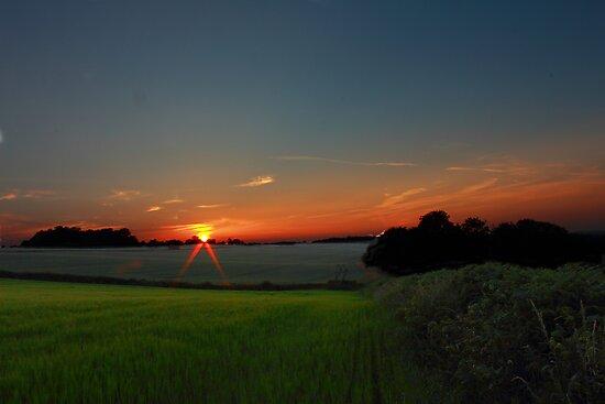 summer fields at dusk by bundug