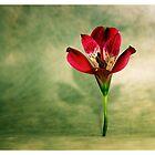 Red 1 by Ronny Falkenstein
