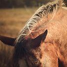 Appaloosa Horse Ears by jamieleigh