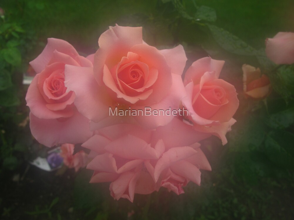 Hot'n heavy roses by MarianBendeth