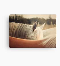Quarter Horse Ears Metal Print