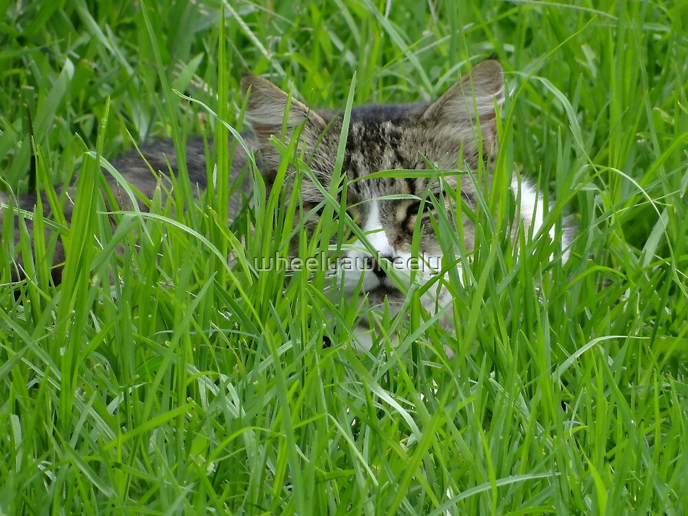 Becky in the Grass by wheelyawheely