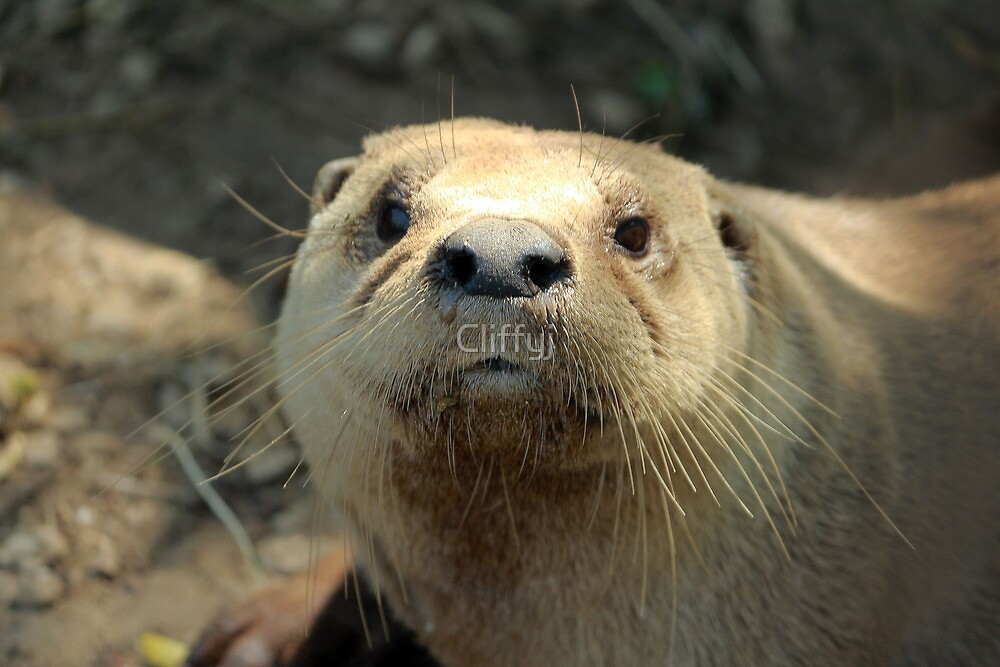 Otter you want by Cliffyj