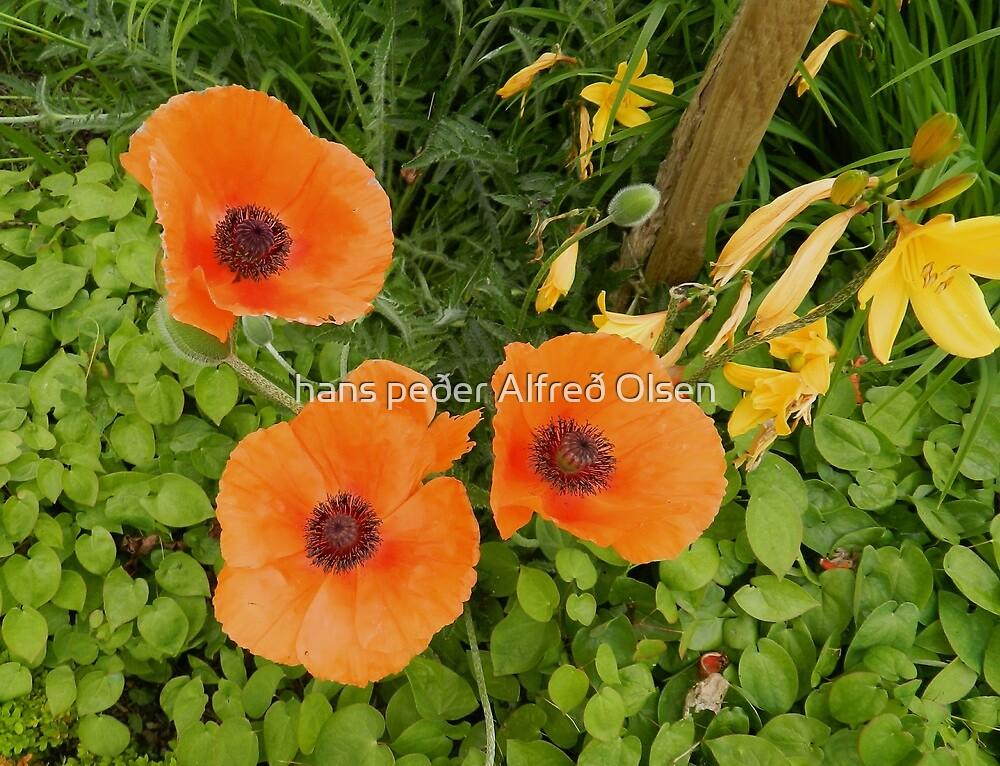 3 poppies of Villandry by hans peðer alfreð olsen